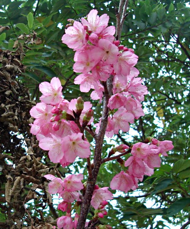 Jom Tengok 26 Jenis Bunga Yang Tercantik Di Dunia Yang Manakah Pilihan Anda Sekamarrindu2009 S Blog